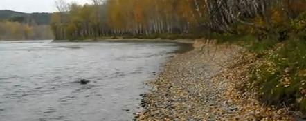 Ловля на тюльку зимой судака и берша
