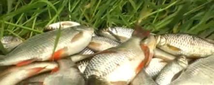 рыбалка берша судака на тюльку
