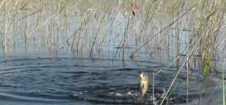 ловля рыбы в западный ветер