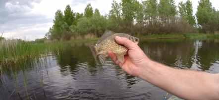 рыбалка на карася в нерест