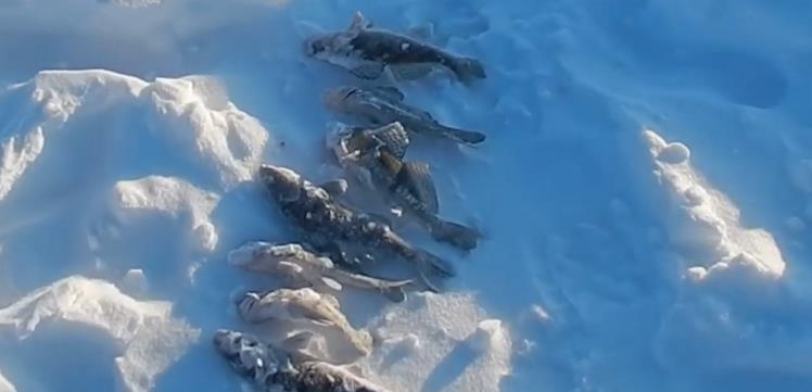 удачный улов на тюльку