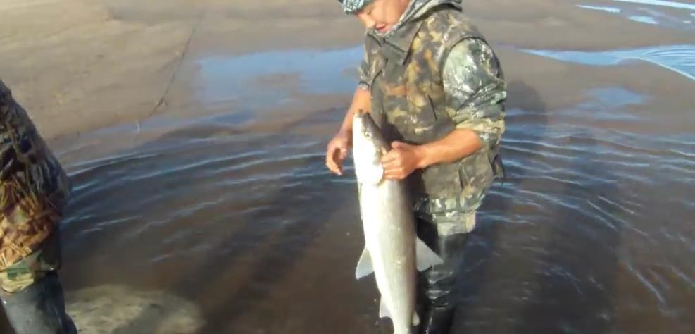 Как ловить белорыбицу