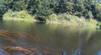 Рыбалка на Хопре