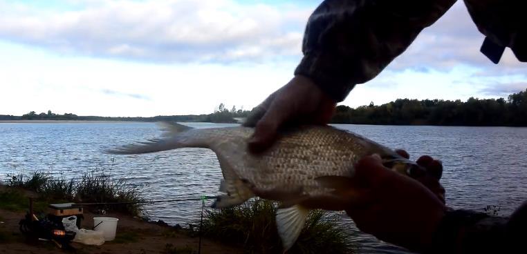 Ловля леща осенью - от места ловли до прикормки