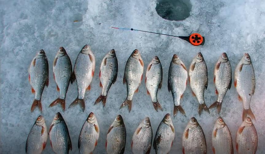 Зимняя плотва - нюансы и тонкости ловли