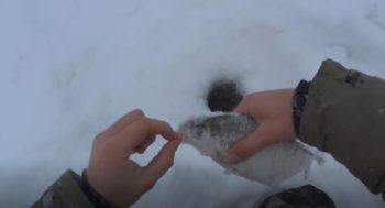 Тонкости ловли белоглазки в январе