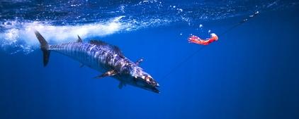Снасти, рыбала.. проводка!