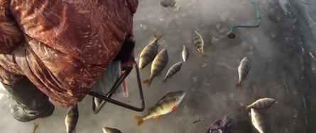 Приманки для ловли окуня зимой