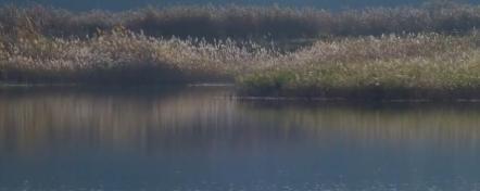 Сезонный календарь рыбака: Октябрь