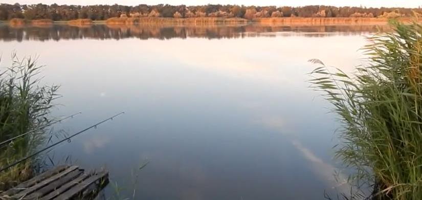 Тонкости ловли карпа на больших водоемах