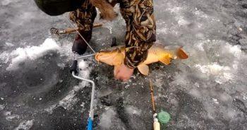 ловля сазана зимой