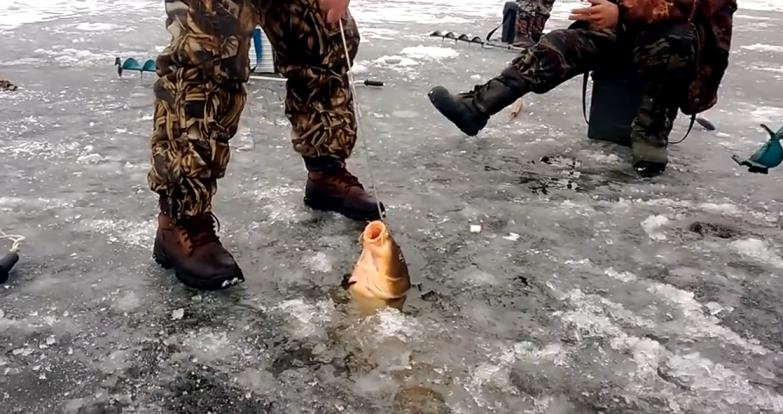 крупный сазан. зима