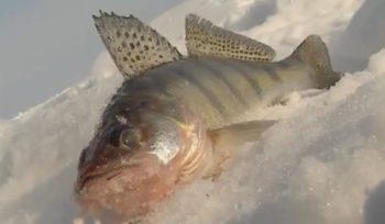 Ловля на тюльку зимой