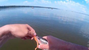 Рыбалка на судака в июне