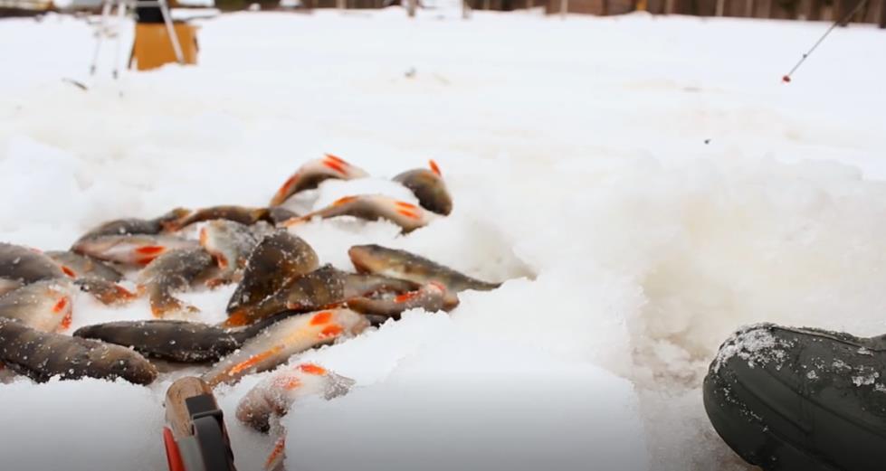 Нюансы зимней ловли берегового некрупного окуня