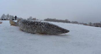Нюансы успешной ловли щуки зимой