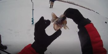 Ловля судака в декабре - нюансы и тонкости