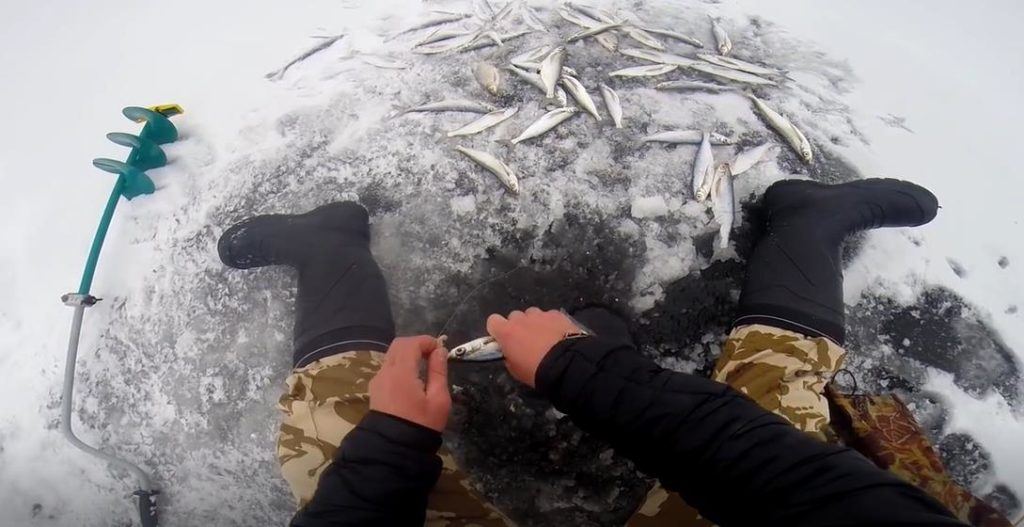 Снасти для ловли чехони зимой