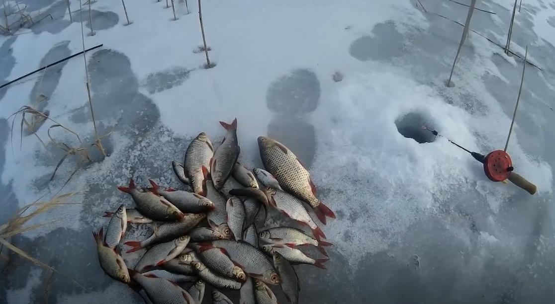 Ловля красноперки в феврале - тактика и нюансы
