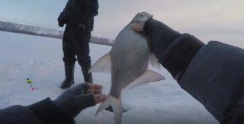 Ловля леща в феврале - тонкости и нюансы