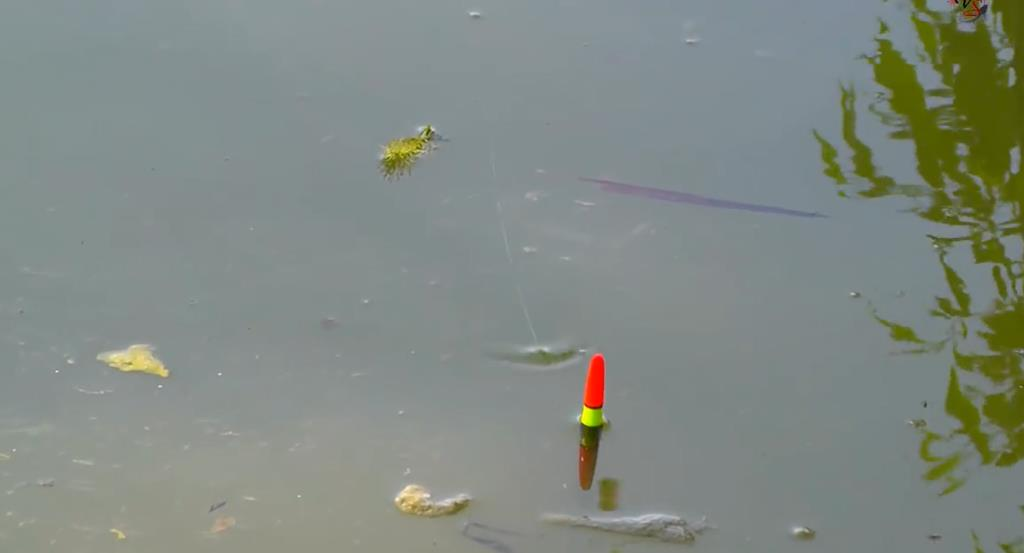 На поплавок в апреле - как и где ловить?