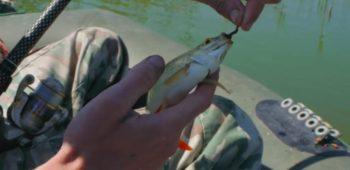 Весенняя рыбалка на краснопёрку