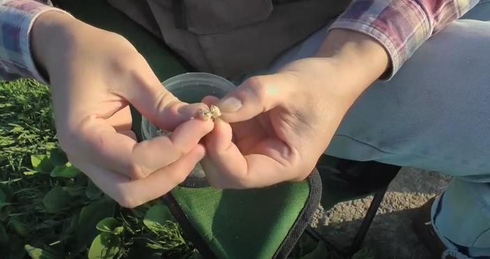 Как ловить карася на перловую крупу