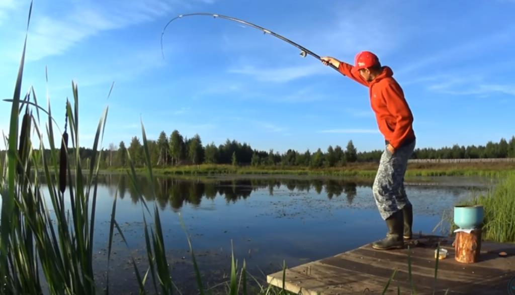 Как давление атмосферы влияет на рыб