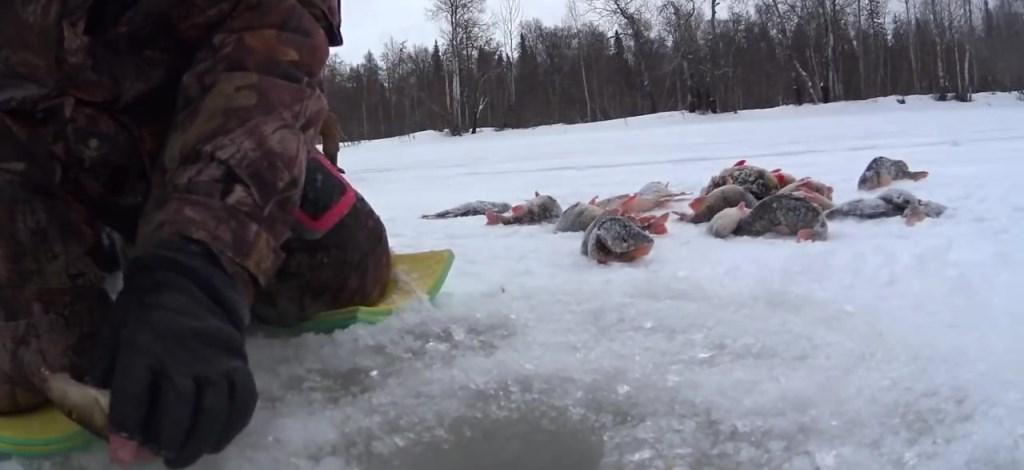 Что надо знать начинающему рыболову о ловле зимой