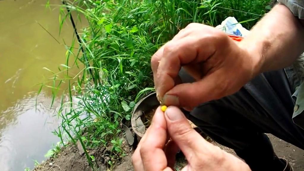 Прикормка и приманка для ловли на небольших реках