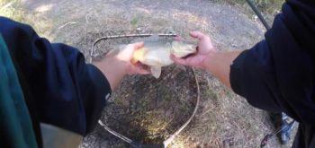Как поймать карпа осенью