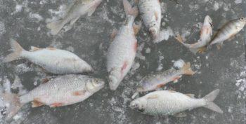Несколько советов начинающему рыболову о зимней ловле