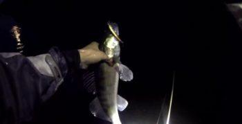 Как правильно ловить судака ночью?